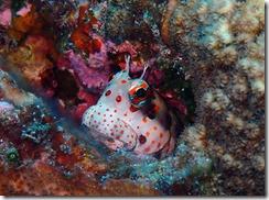 okinawa diving1487