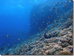 okinawa diving1488
