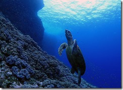 okinawa diving1489