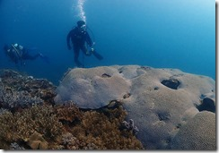 okinawa diving1508