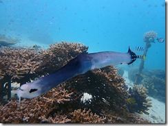 okinawa diving1509