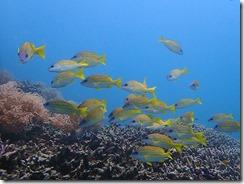 okinawa diving1510