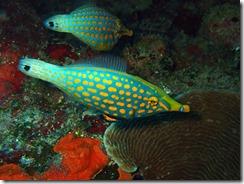 okinawa diving1511