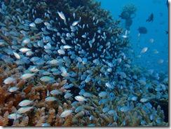 okinawa diving1512