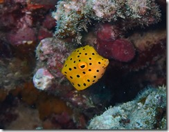 okinawa diving1514