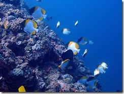 okinawa diving1519