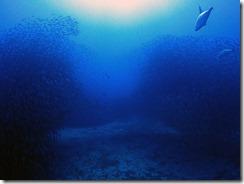 okinawa diving1521