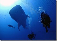 okinawa diving1525
