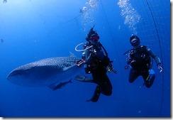 okinawa diving1526