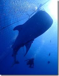 okinawa diving1527