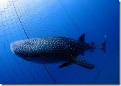 okinawa diving1528
