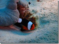 okinawa diving1529