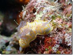okinawa diving1530