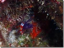 okinawa diving1531