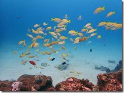 okinawa diving1532