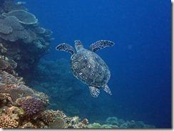 okinawa diving1534