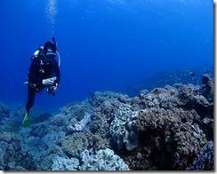 okinawa diving1538