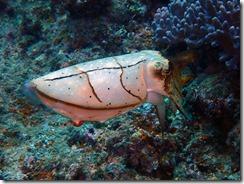 okinawa diving1542