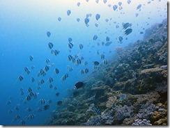 okinawa diving1543