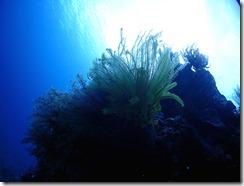 okinawa diving1544