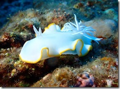 okinawa diving1546