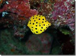 okinawa diving1550