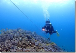 okinawa diving1551