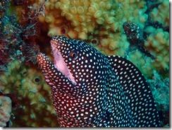 okinawa diving1553