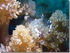okinawa diving1554