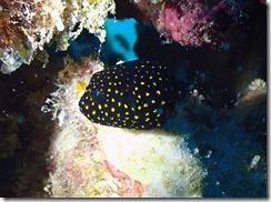 okinawa diving1557