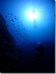 okinawa diving1558