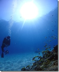 okinawa diving1559