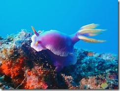 okinawa diving1560