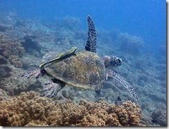 okinawa diving1562