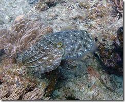okinawa diving1564