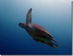 okinawa diving1577