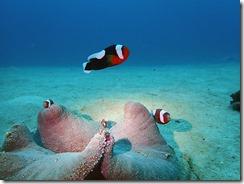 okinawa diving1578