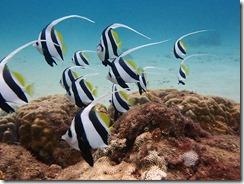 okinawa diving1580