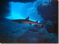 okinawa diving1583