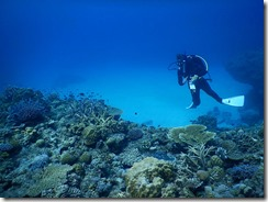 okinawa diving328