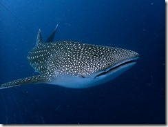 okinawa diving718