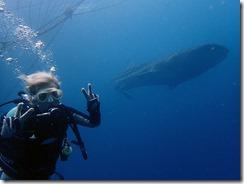 okinawa diving719