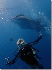 okinawa diving720