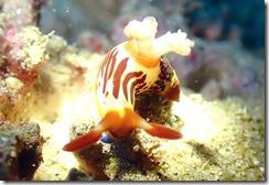 okinawa diving721
