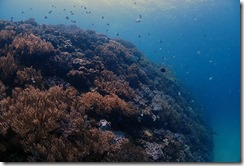 okinawa diving722