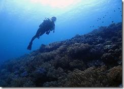 okinawa diving723