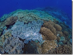 okinawa diving725