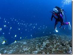 okinawa diving727