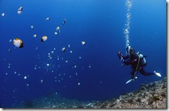 okinawa diving732