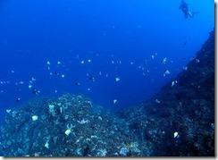 okinawa diving733